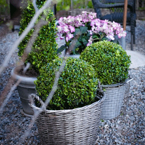 Övriga Växter